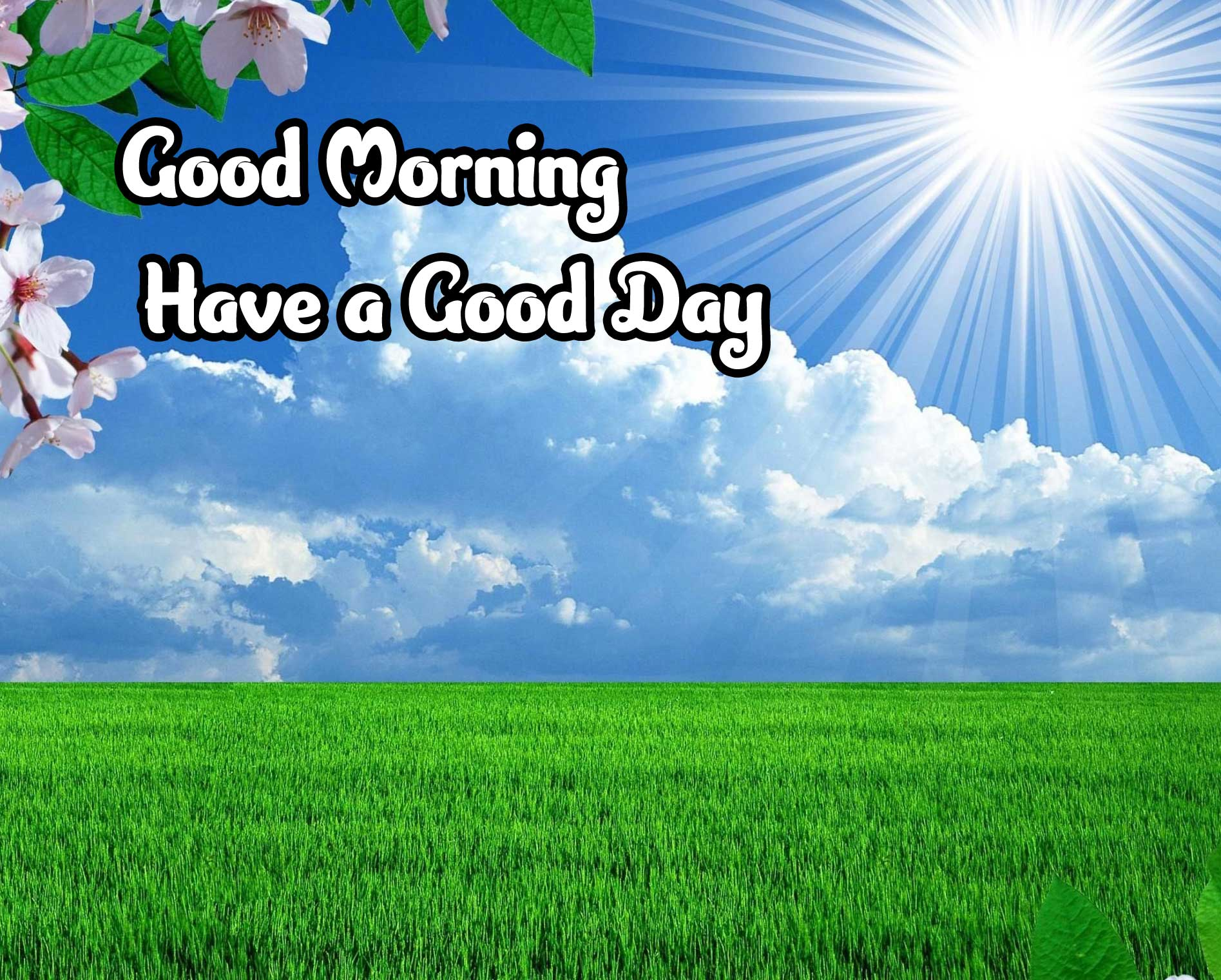 Good Morning Wishes Images 4K 1080p Photo HD Download