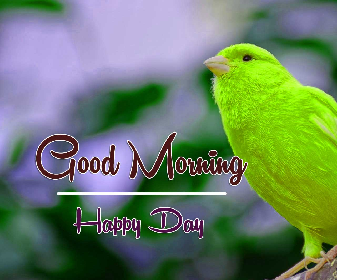 good morning wishes to wife Pics pictures Download