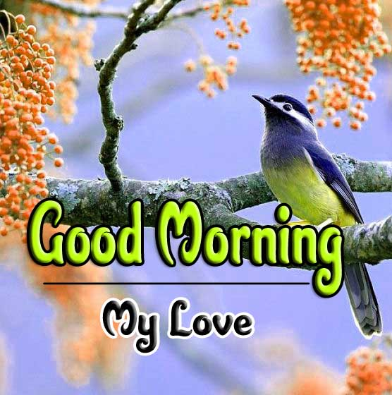 good morning wishes to wife Images Pics Download