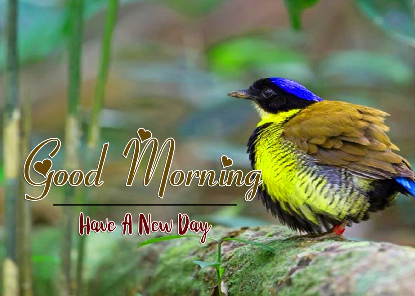 good morning wishes to wife Images Free Download