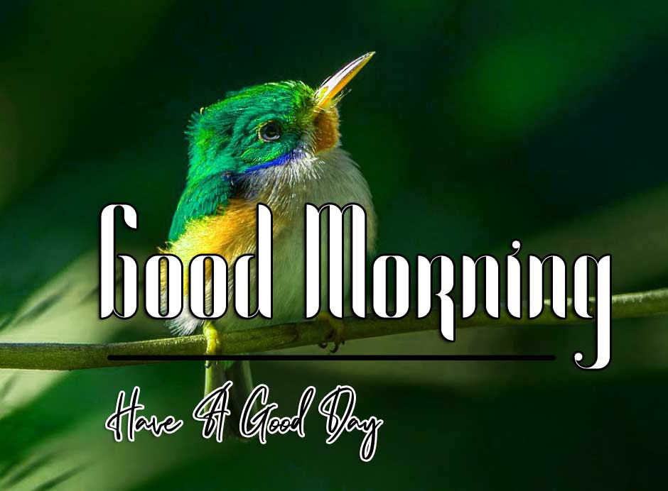 good morning wishes to wife Images Pictures Download
