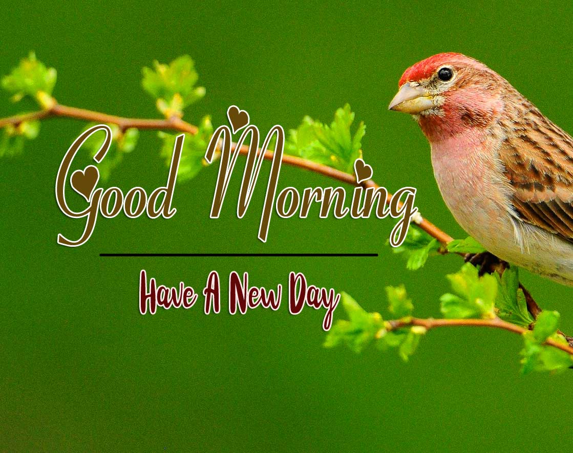 good morning wishes to wife Images HD Download