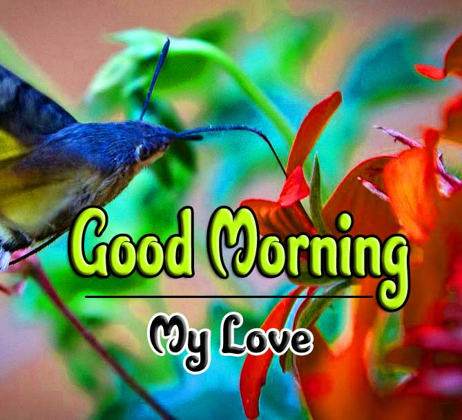 good morning wishes to wife photo Free Download