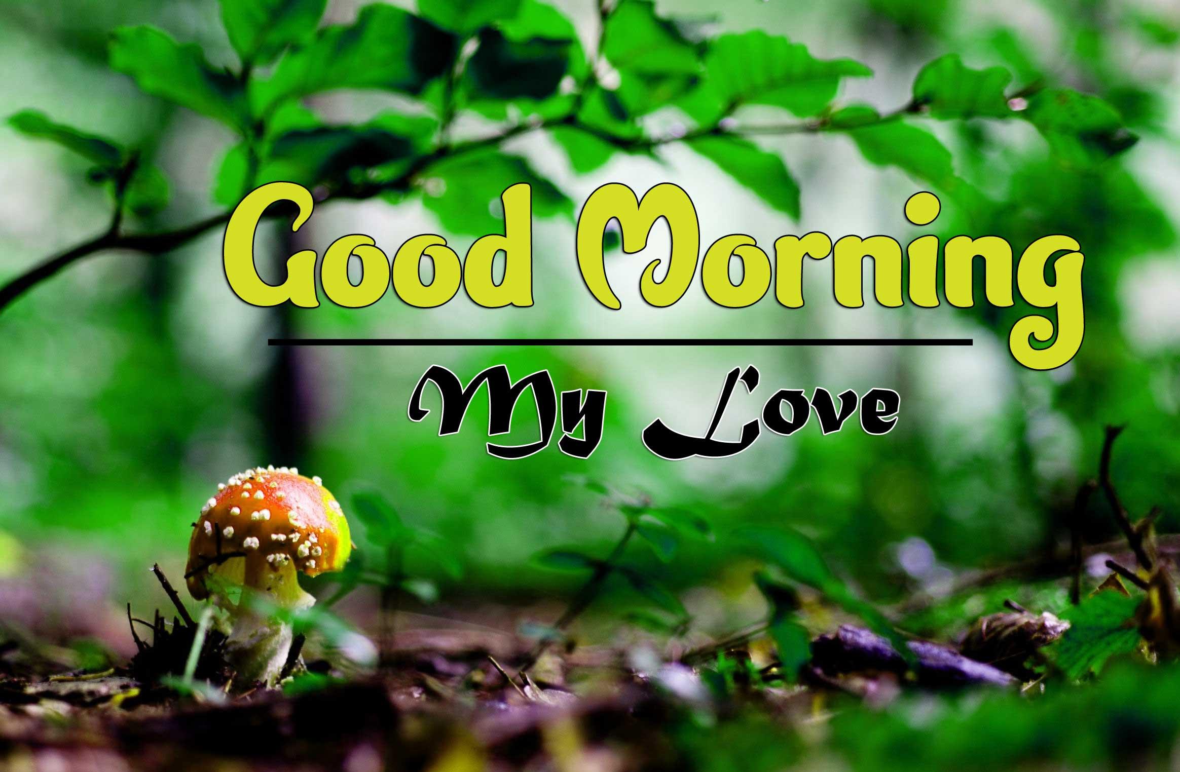Free Good Morning Wallpaper Photo Download
