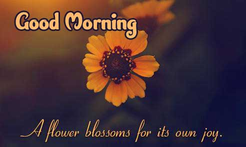 Good Morning Images with English Thought Pics Wallpaper Free Download