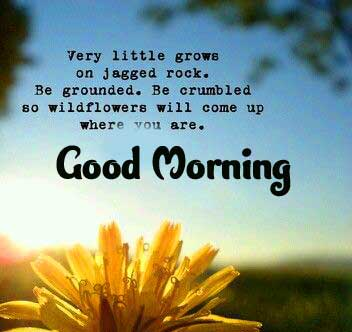 English Thought Good Morning Images Pics Wallpaper Latest Download