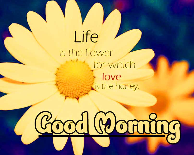 Best Quality English Thought Good Morning Images Pics Download