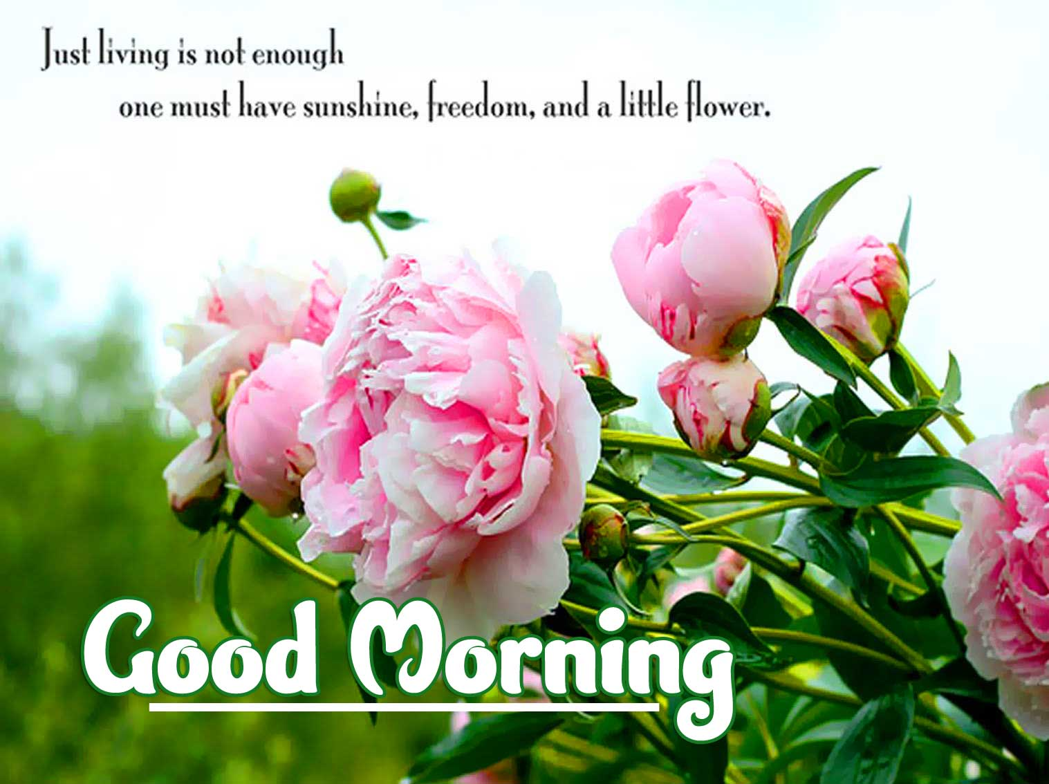 English Thought Good Morning Images Pics Wallpaper Download