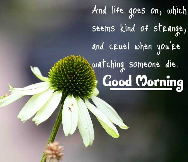 English Thought Good Morning Images Pics Wallpaper Free Download