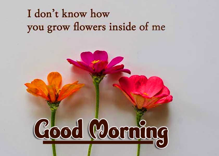 Good Morning Images with English Thought Pics With Flower