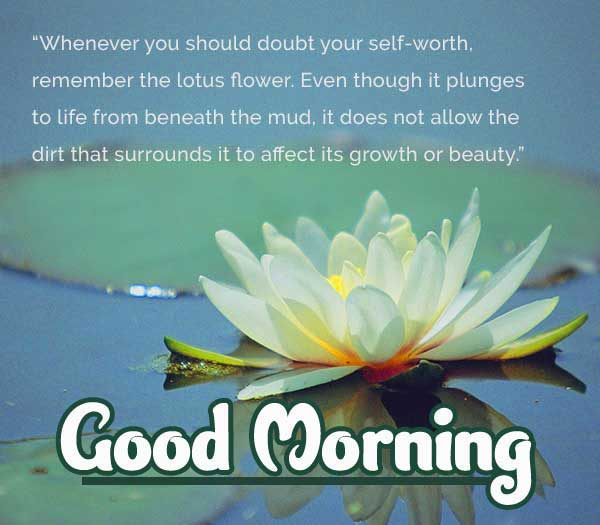 Good Morning Images with English Thought Pics HD Download Free