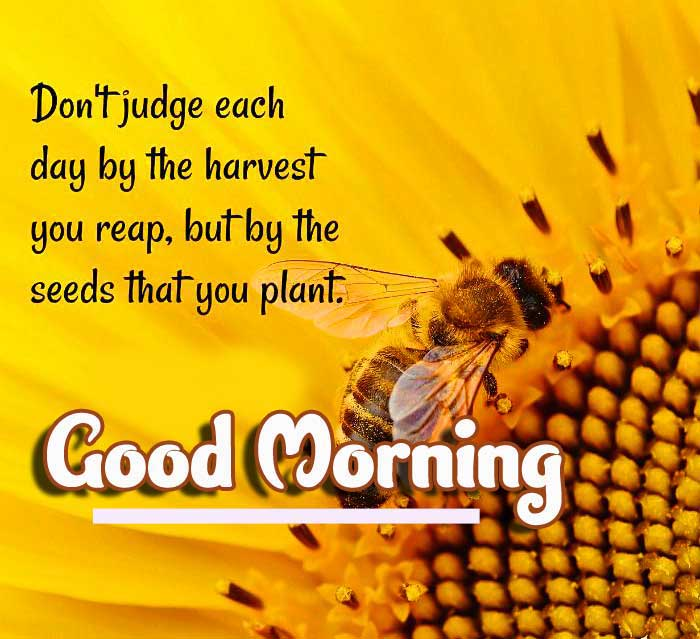 Good Morning Images with English Thought Pics Free Download