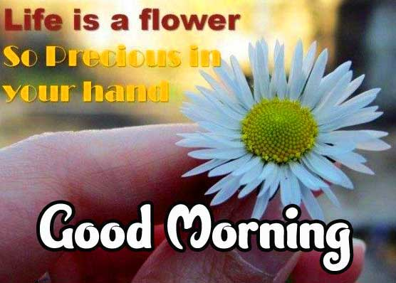 Good Morning Images with English Thought Pics Download New