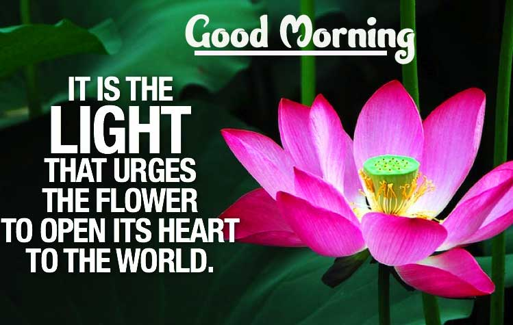 Latest Free Best Good Morning Images with English Thought Pics Download
