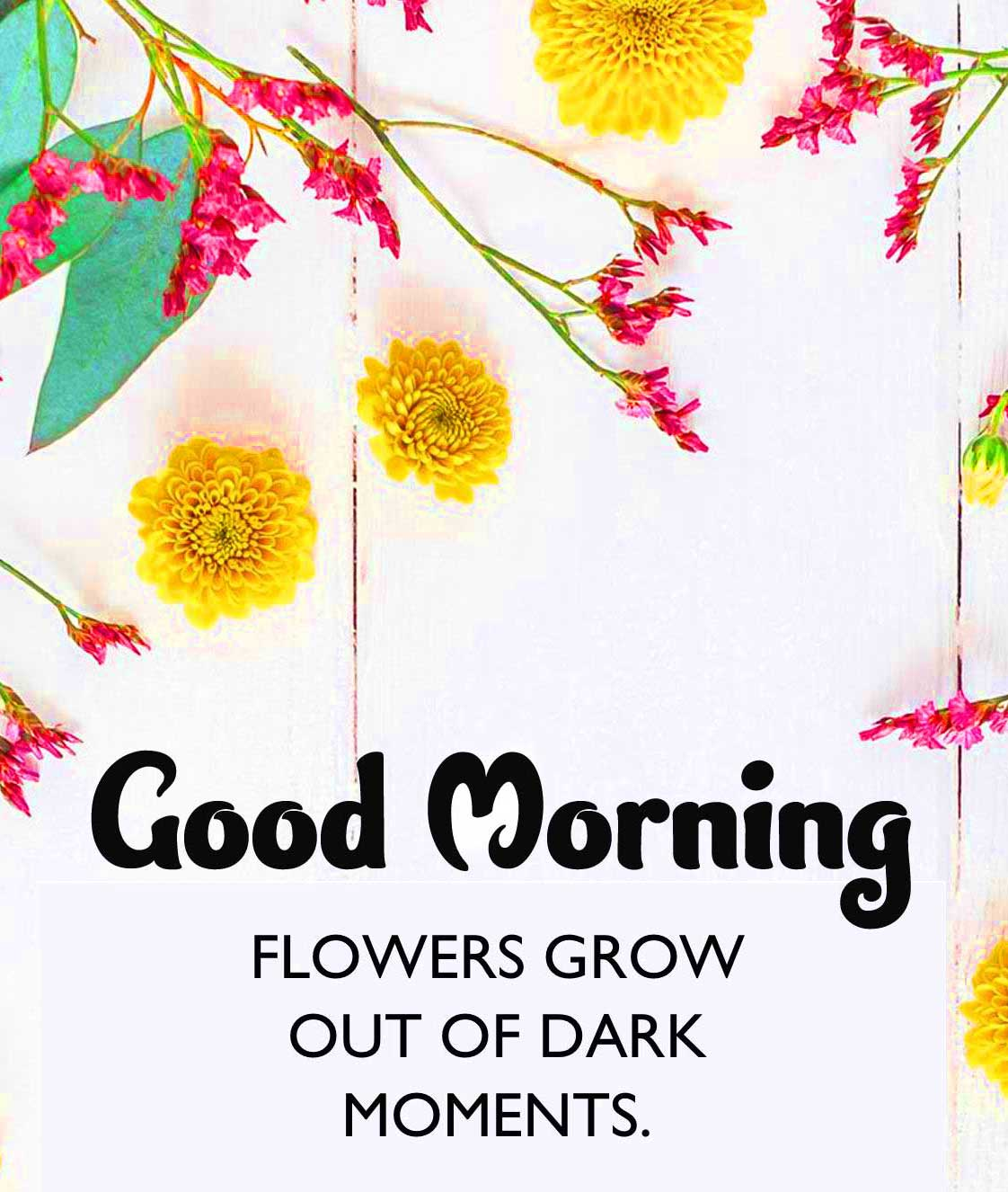 Good Morning Images with English Thought Wallpaper Pics Download