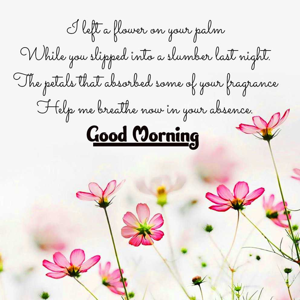 Good Morning Images with English Thought Wallpaper Free Download