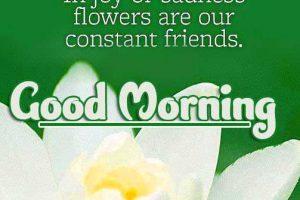 Good Morning Photo Download 101