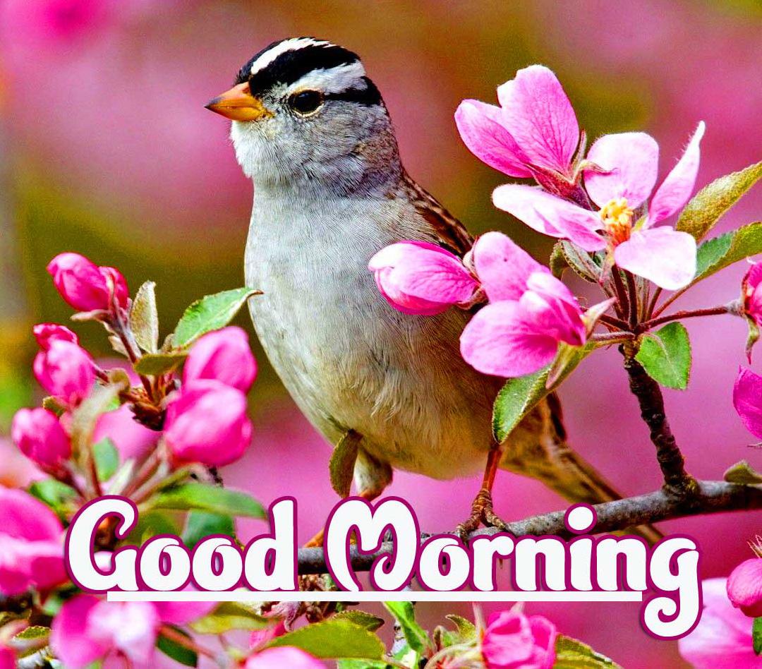 1080p Good Morning Photo free Download