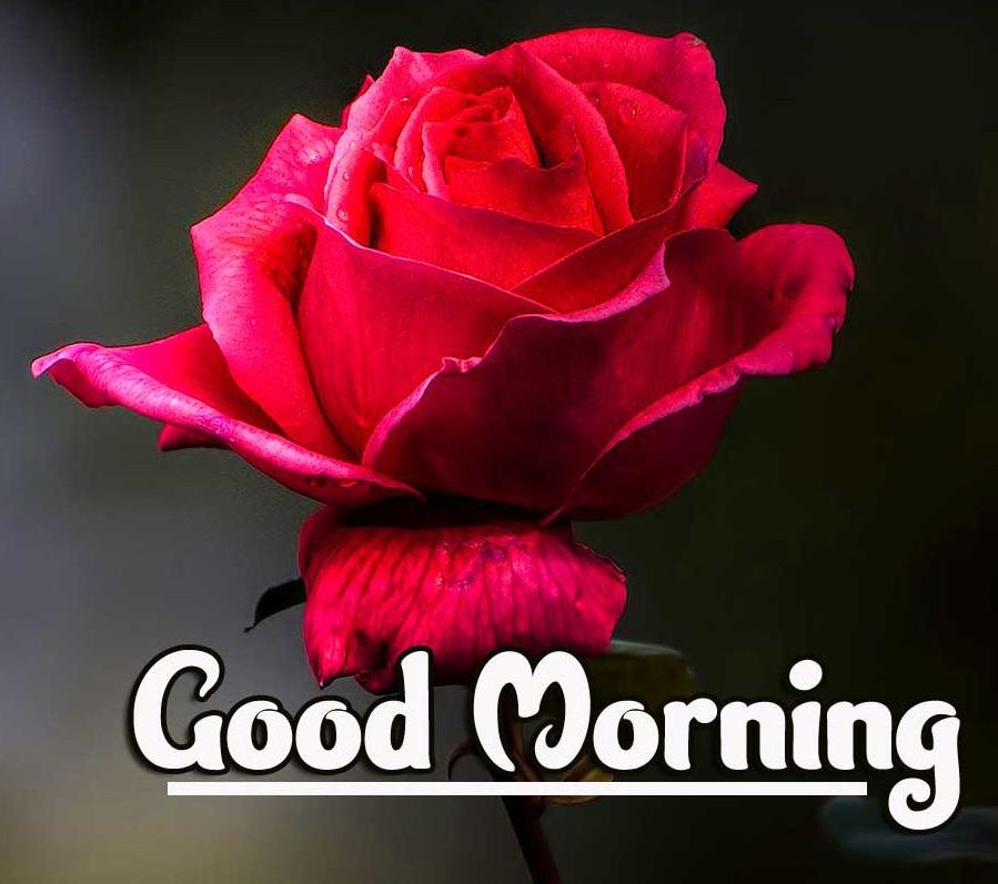 1080p Good Morning Wallpaper Pics Free Download