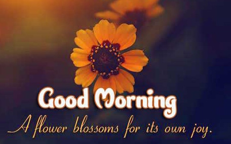 1080p Good Morning pic Wallpaper Download