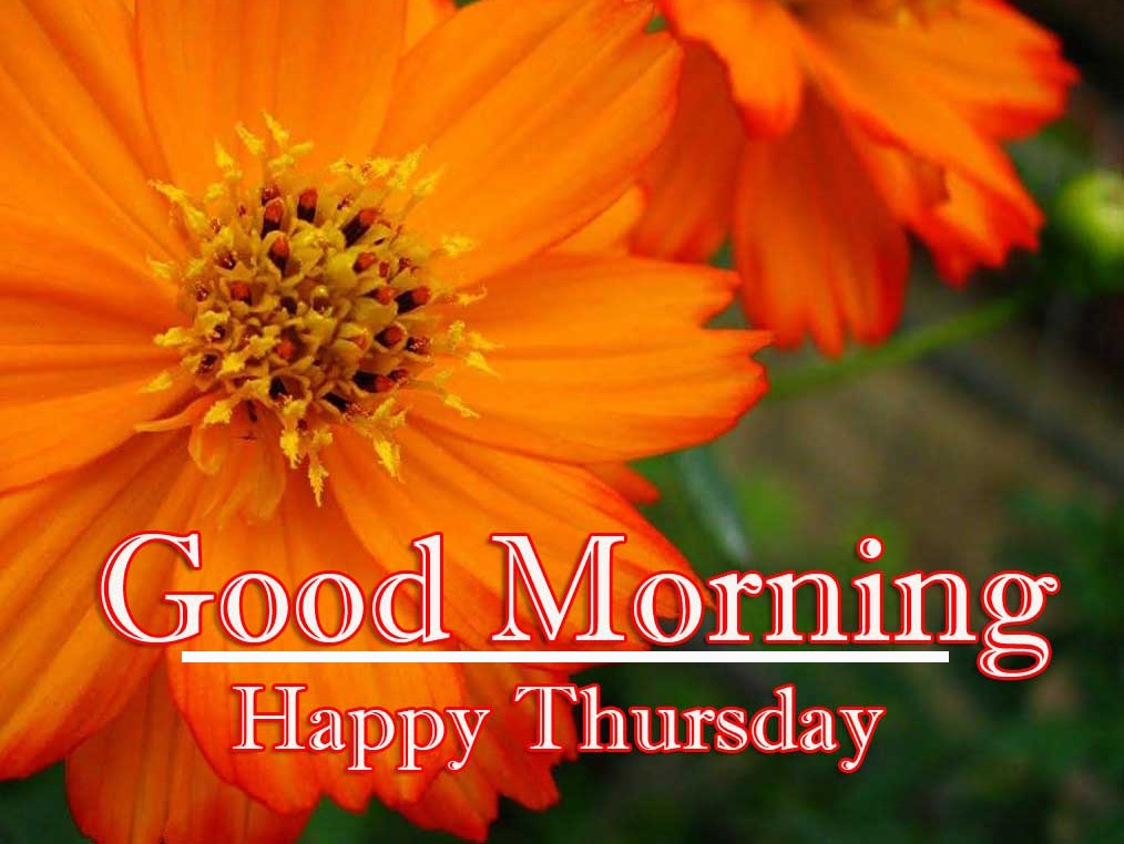 Good Morning Thursday Wallpaper Download 17