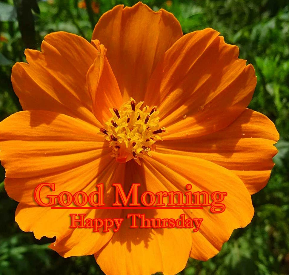 Good Morning Thursday Images Photo Pics Download