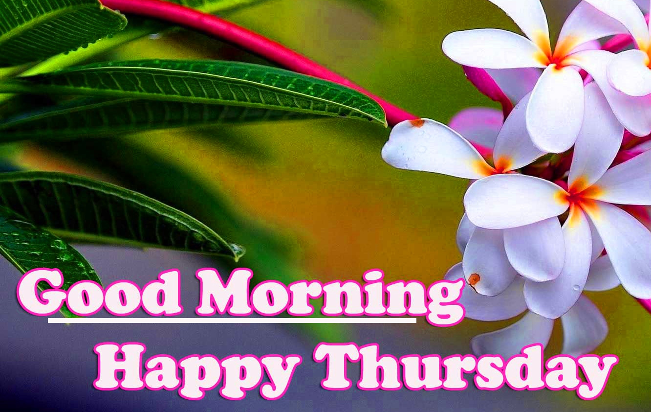 Good Morning Thursday Images Wallpaper Free Download Free