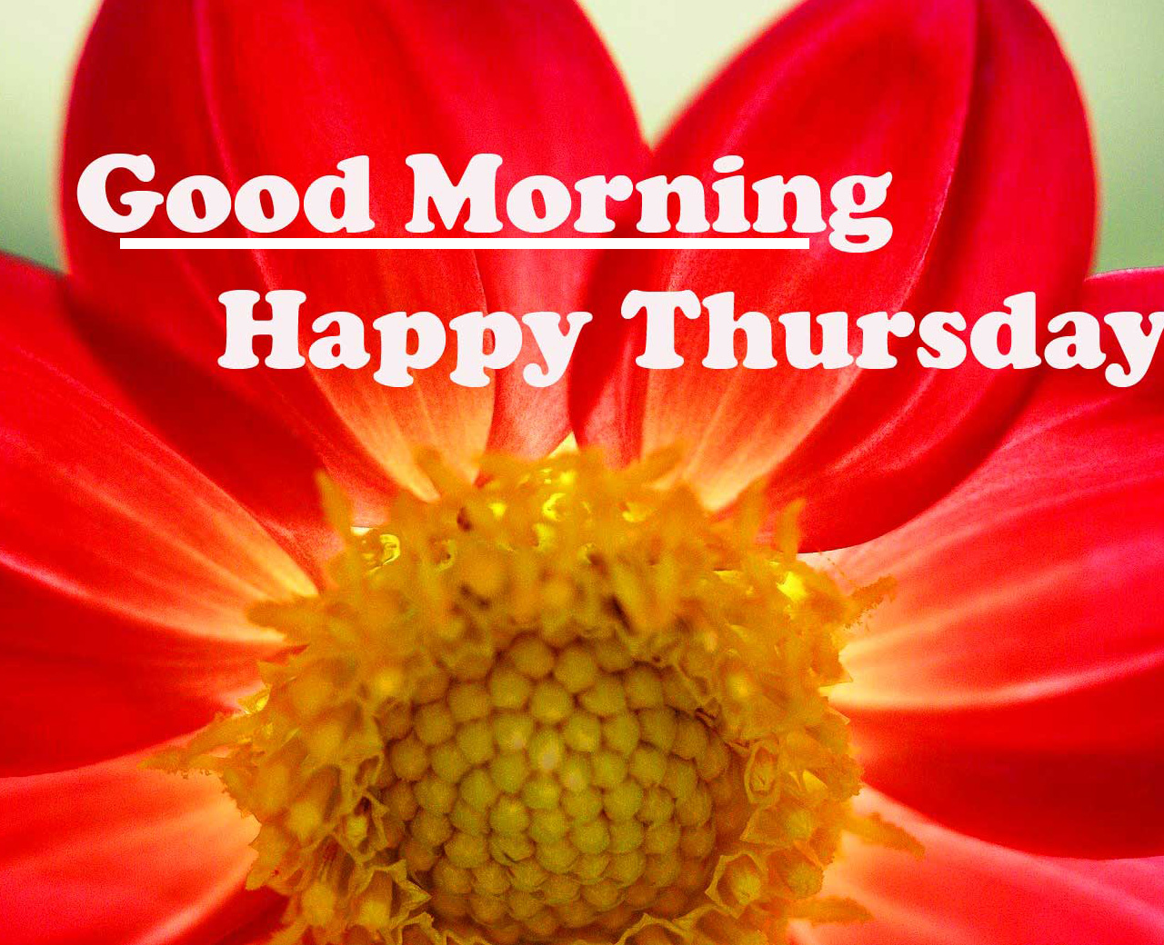 Latest Free Good Morning Thursday Images Pics Download