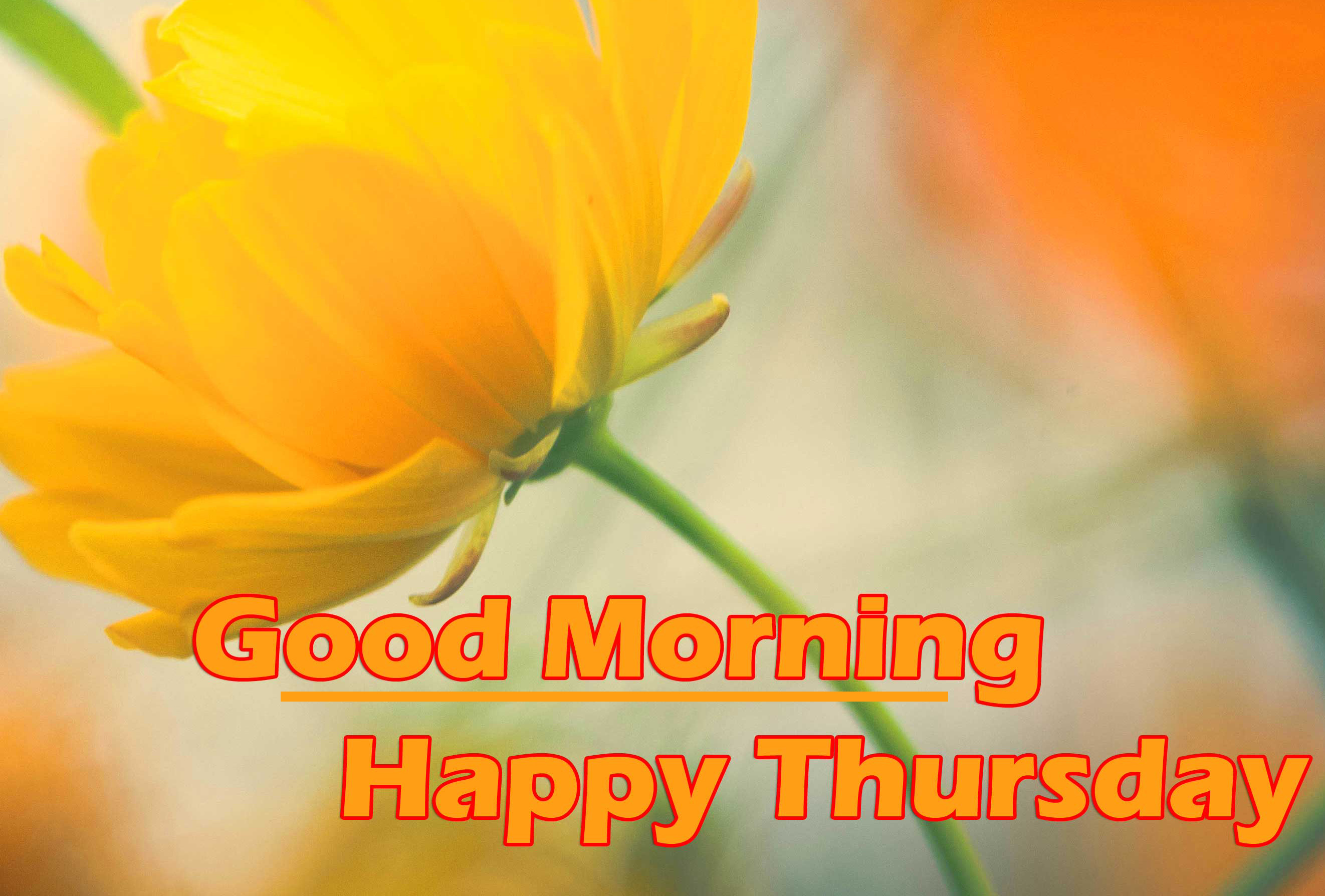 Good Morning Thursday Images Photo Free Download