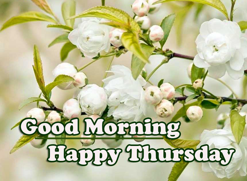 Good Morning Thursday Images Pics Free Best Download