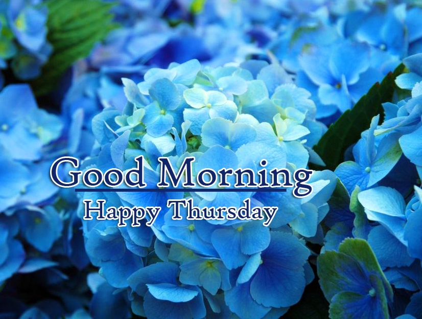 Good Morning Thursday Images Wallpaper Free Download
