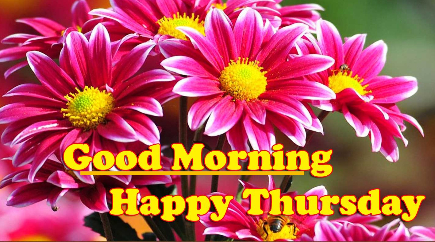 Best Quality Good Morning Thursday Images Pics Download