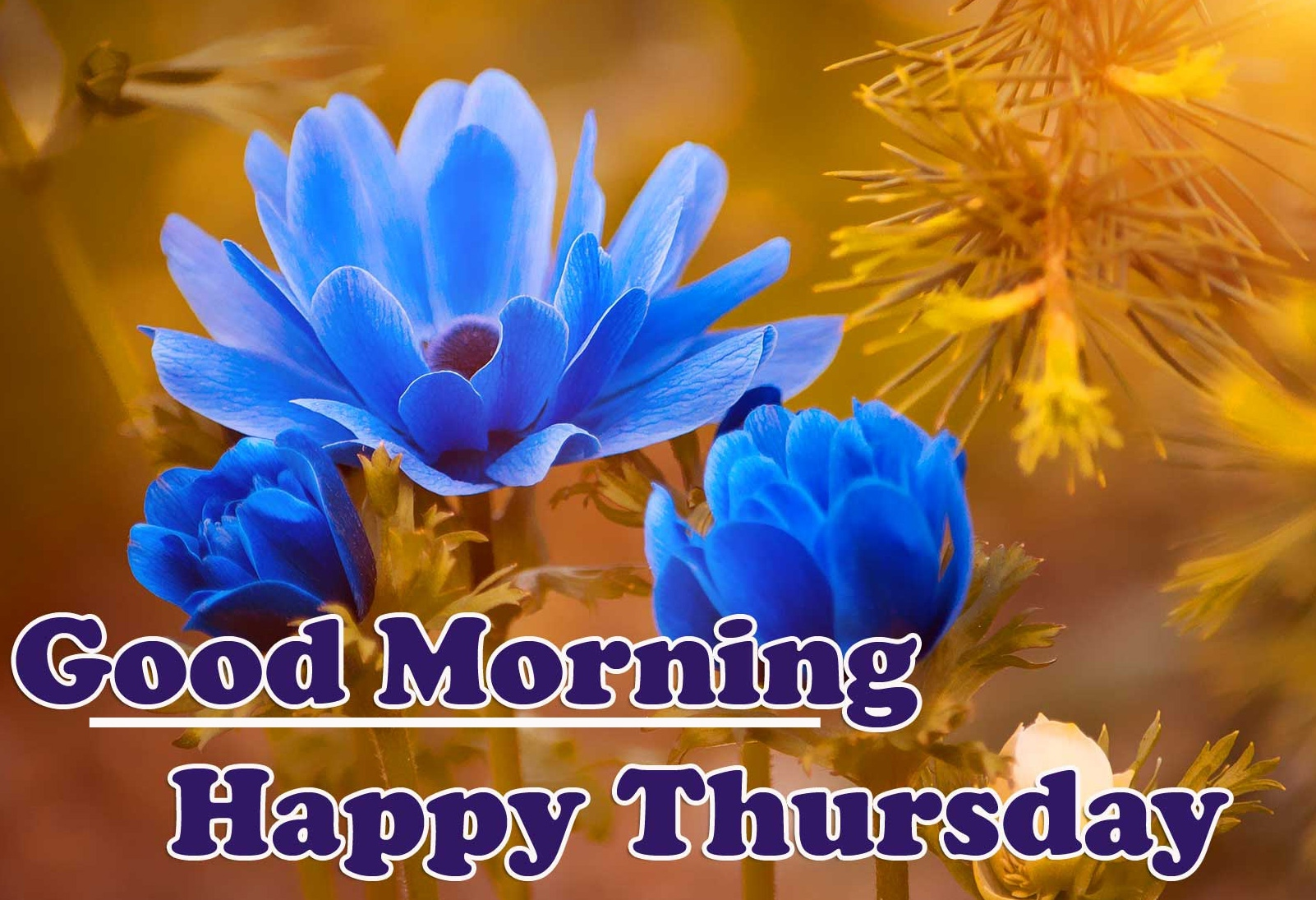Flower Free Good Morning Thursday Images Pics Download