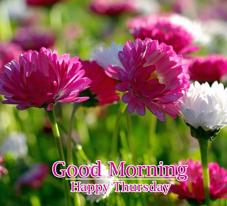 Good Morning Thursday Images Pics Free Download