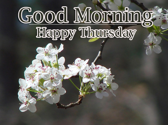 Good Morning Thursday Images Pics Wallpaper New Download