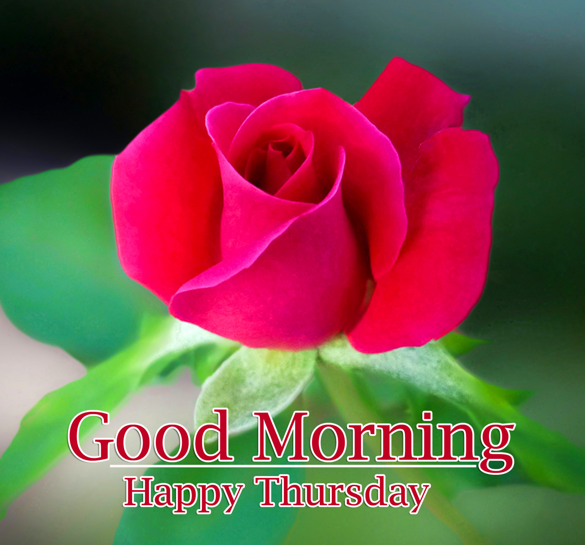 Good Morning Thursday Images Photo for Facebook