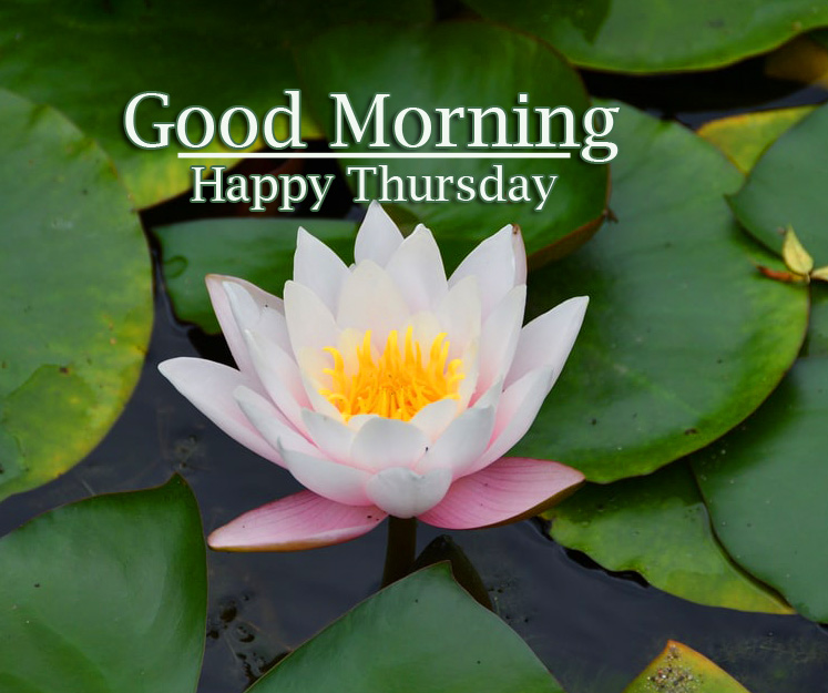 Good Morning Thursday Images Wallpaper pics Download