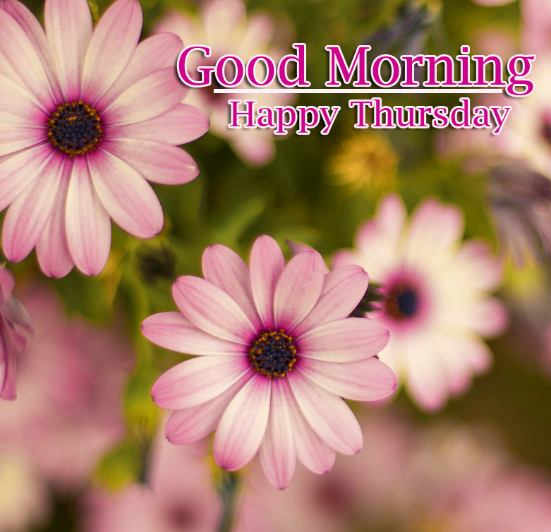Good Morning Thursday Images Wallpaper Download