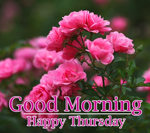 Good Morning Thursday Images Wallpaper Best Download