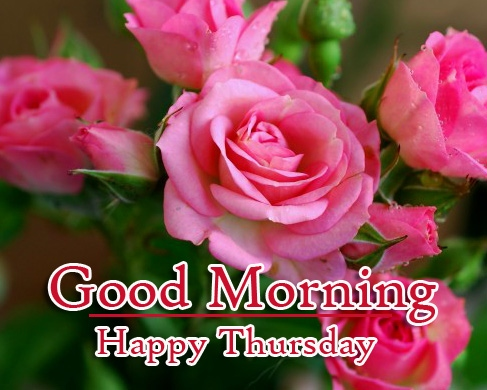 Rose Free New Good Morning Thursday Images Pics Download