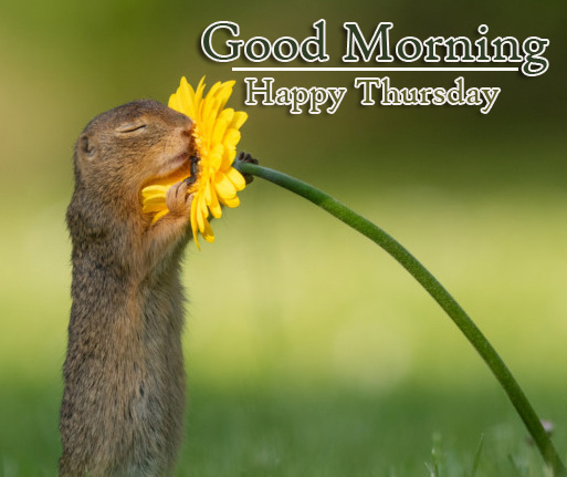 Latest Free Best Good Morning Thursday Images Pics Download
