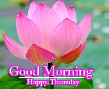 Good Morning Thursday Images Pics Download Free Download