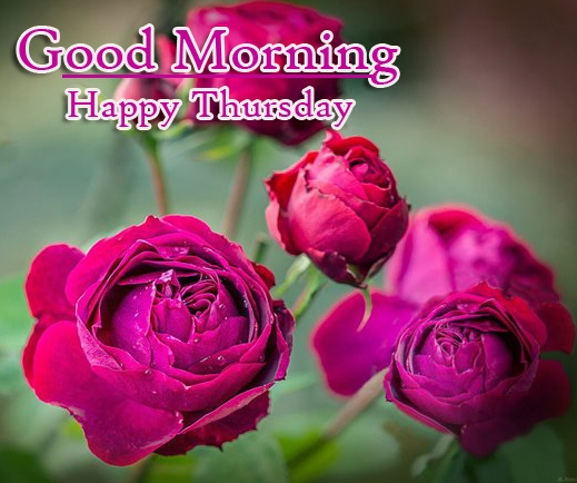 Good Morning Thursday Images Pics Free Download Latest