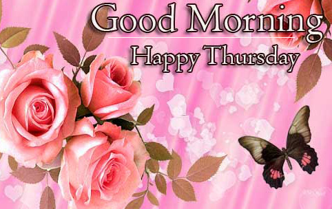 Good Morning Thursday Images Pics Wallpaper With Rose