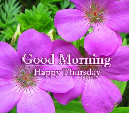Latest new Good Morning Thursday Images Pics Download Free