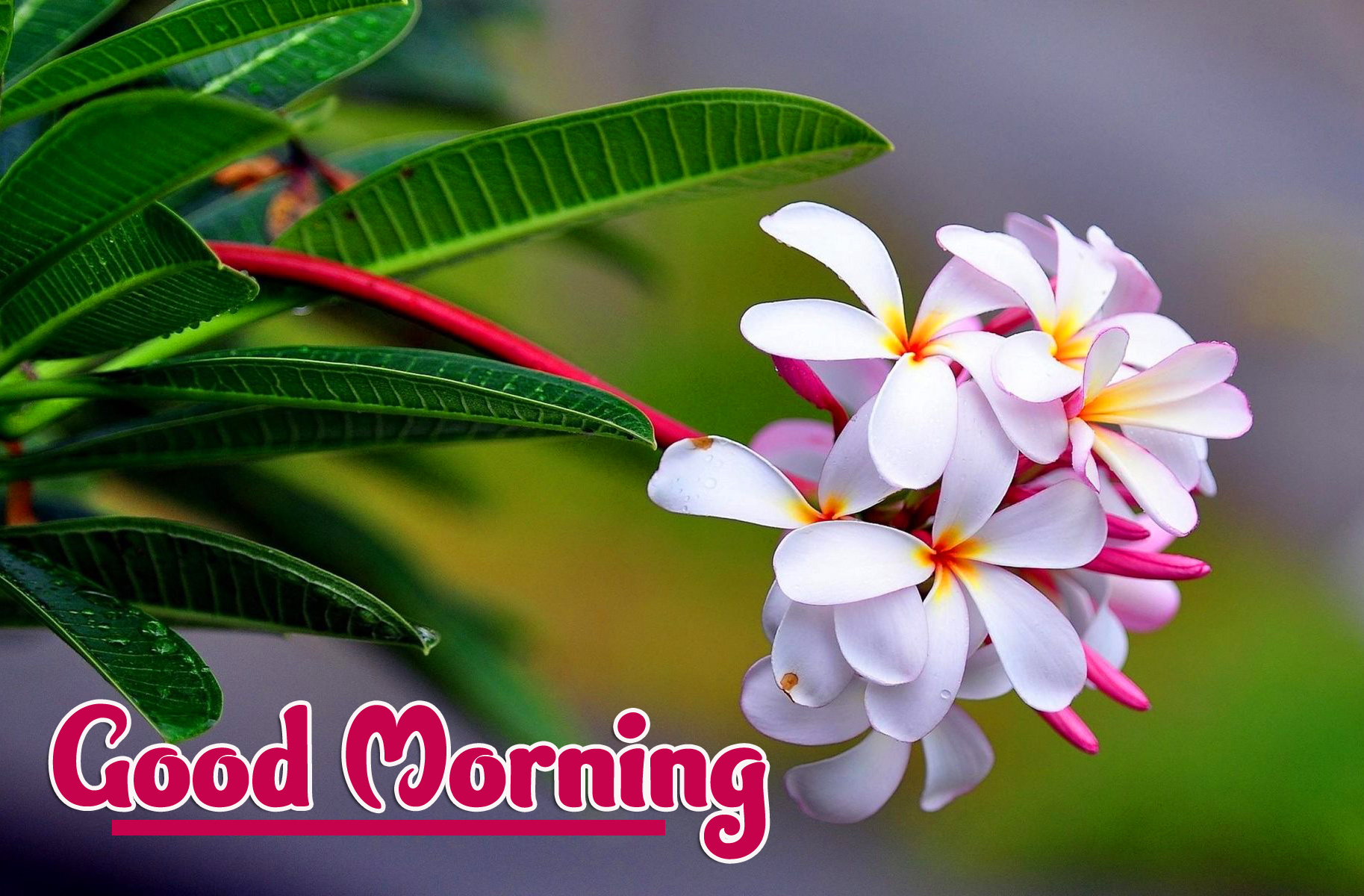 Good Morning Wallpaper Pictures for Facebook