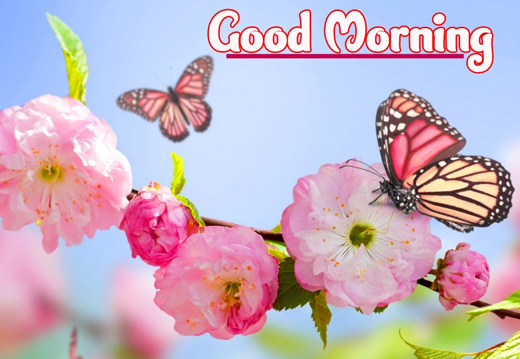 Good Morning Wallpaper Pics Wallpaper Free