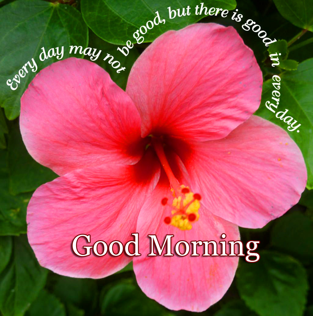 Good Morning Wallpaper Photo With Flower