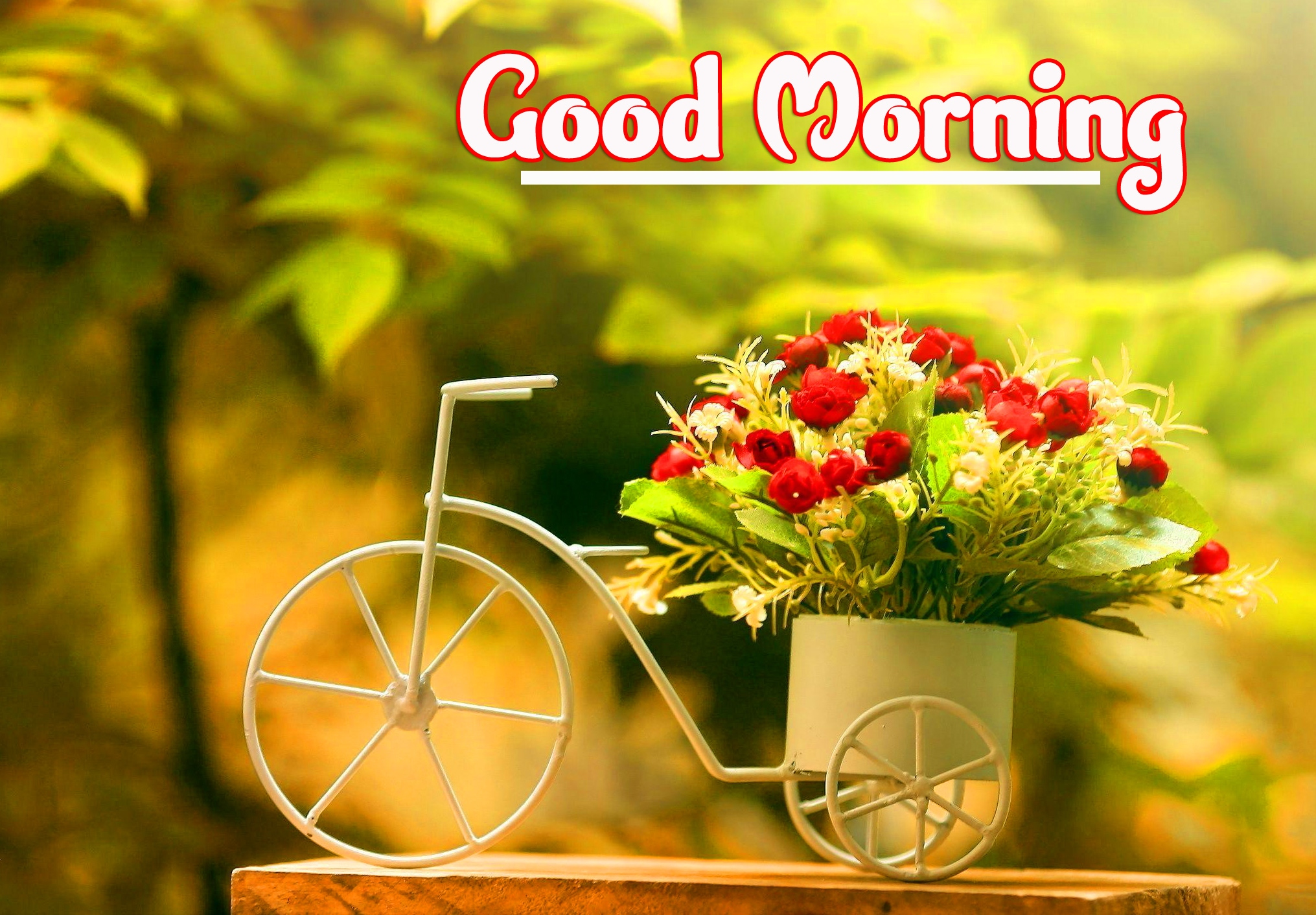 Good Morning Wallpaper Photo Download Free