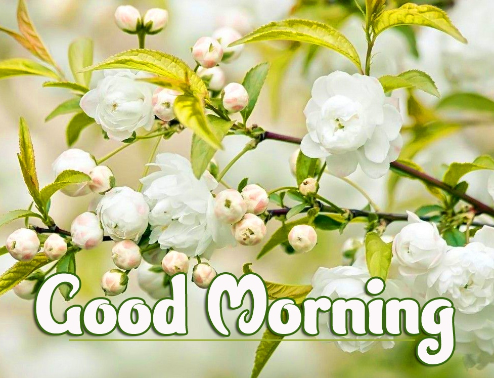 New Best Good Morning Wallpaper Pics Download FREE